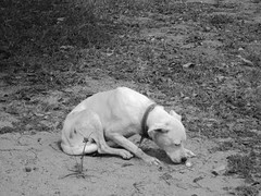 Doggy (Paloma Cabral Guimarães) Tags: cachorro sniffing cheirando