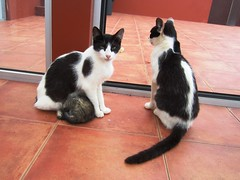 IMG_8483 (Chat Malicieux) Tags: cats katzen kätzchen joana chico