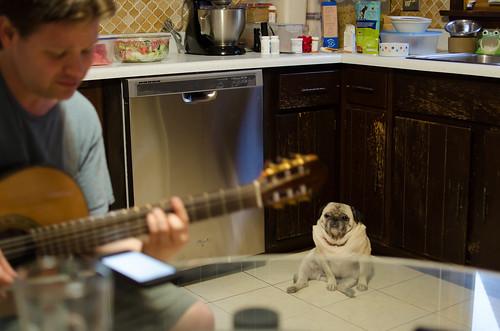 Ryan with judgmental pug