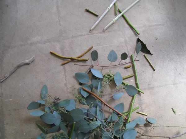 eucalyptus floor