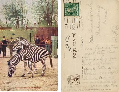 Zebras - Lincoln Park Zoo 1909