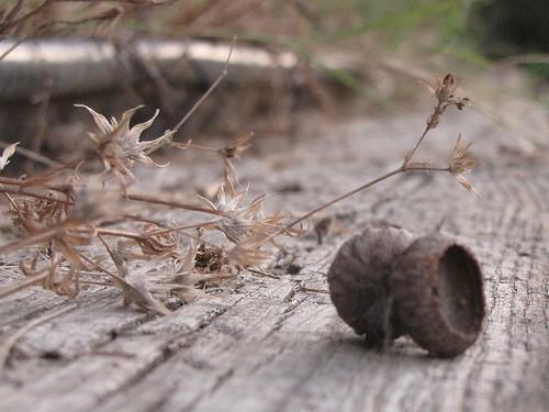 acorn 1 6-26-10