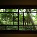 新緑の窓外