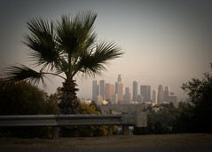 Palmed Skyline (Mark Luethi) Tags: skyline la losangeles downtown view skyscrapers cluster group palmtree elysian downtownla elysianpark coolview angelspoint laskyline