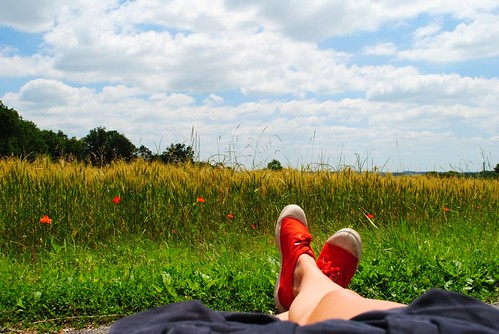 lounging in the poppy field.