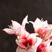 1006 flowers #6