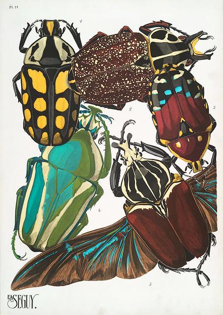 018-Insectes vingt planches en phototypie coloriées…1928- Eugene Alain Seguy