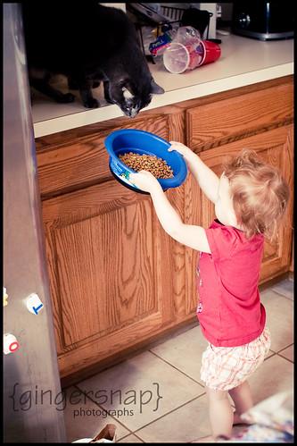 cat food6
