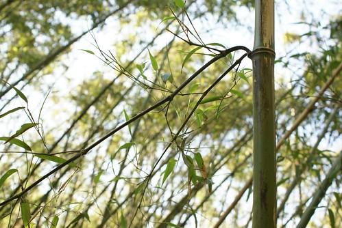 鳥屋野逆ダケの藪