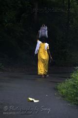 Carrying the hopes for tomorrow.. (www.senyphotography.com) Tags: life road woman india rain yellow lady umbrella canon eos path kerala monsoon f4 vazhachal athirappilly 24105l seny chalakkudy 550d anakkayam dpvalparaitrip