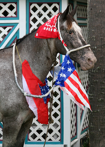 A Horse Prepared for the Clamerica Celebration Parade