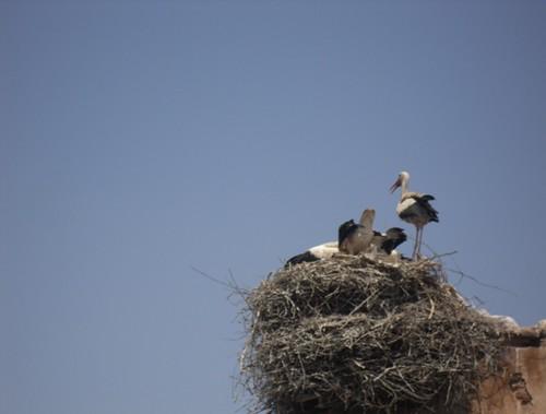 20 storks