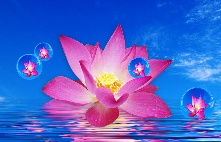 Lotus Flower Floating with Bubbles