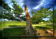 Felbrigg Hall, Felbrigg, Norfolk (Lord Muttley McFester) Tags: tree norfolk wideangle hdr highdynamicrange felbrigg 14mm felbrigghall tonemapped