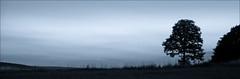 Blue (krys1969) Tags: morning trees sunset sky panorama tree monochrome grass backlight night clouds sunrise canon fence reflections river germany eos dawn early ast sonnenuntergang sundown nacht feld himmel wolken hills berge gradient gras uni redsky dmmerung monochrom zaun blatt ste sonne bltter bume sonnenaufgang baum gegenlicht morgens zweige colorize abendrot stamm morgenrot grser baumstmme frh hgel reflektionen baumstamm zweig wolkenlos stmme farbverlauf einfarbig 50d badems canoneos50d