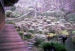 細雪(Sasame-yuki)-3 (転倒虫) Tags: white green japan garden moss kyoto 京都 wa ohara wabi sabi sanzenin 苔 白 大原 三千院 坪庭 tuboniwa