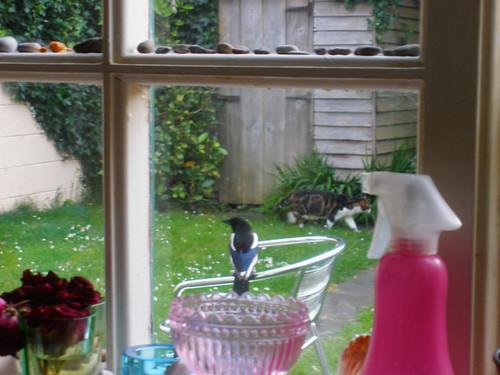 Magpie and Thatsit