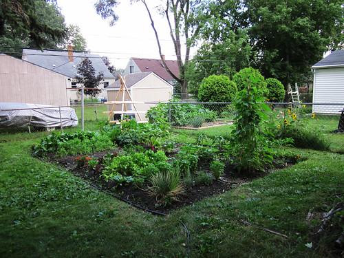 2010 Garden: Week 7