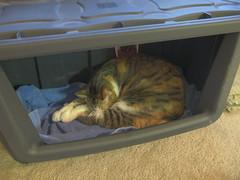 ScoutHDR (Scott Barricklow) Tags: cat canon kitty scout powershot gato neko hdr g11