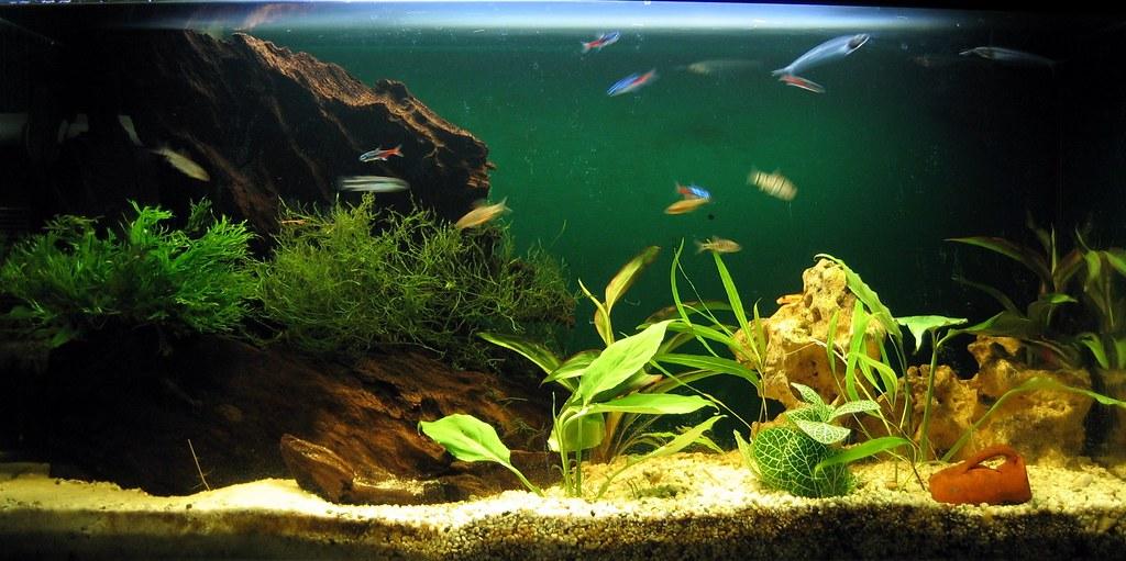 Домашние аквариумы фото 1