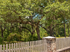 St. James Santee Church yard - Charleston County, South Carolina (jimf_29605) Tags: orchids southcarolina olympus wildflowers zuiko e510 zd 1454mm charlestoncounty greenflyorchid francismarionnationalforest epidendrummagnoliae stjamessanteechurch