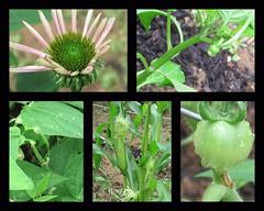 changes in the garden