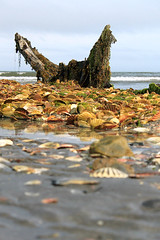 Old ship wreck - co Down (d_casement) Tags: sea water ship shell northernireland wreck codown portavogie dariacasement