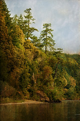 Rogue Landscape (mythlady/Elise Wormuth) Tags: trees sky oregon forest river landscape textures rogueriver flypapertextures summerpainterly