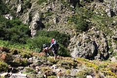 Remontée de la Haute Lonca : le groupe suit à l'approche du ruisseau de Ghjarghje (photo Georges Welterlin)