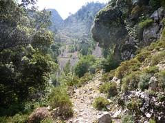 Sortie de la forêt de chênes-verts et lacets du sentier de Caprunale