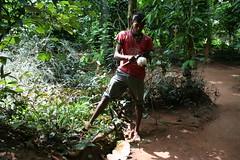 IMG_2657 (Derizor) Tags: trees coconut srilanka snakes goldentemple derizor khantisci