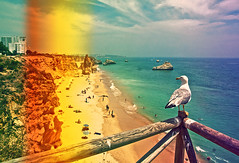 film. (KeizGoesBoom) Tags: summer holiday film beach portugal june digital photoshop lightleak grainy algarve 2010 praiadarocha filmeffect seagill