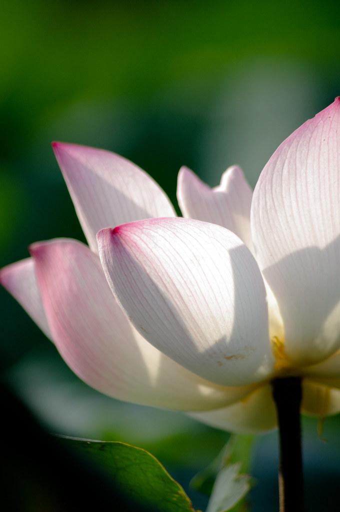 開站了 來朵花吧