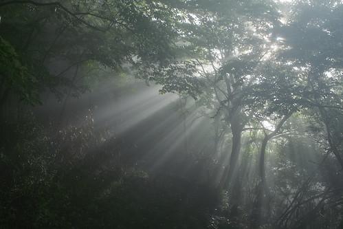 フリー写真素材, 自然・風景, 森林, 霧・霞, 日光・太陽光線, 日本,