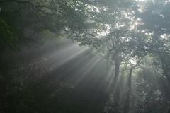 [フリー画像] 自然・風景, 森林, 霧・霞, 日光・太陽光線, 日本, 201007241900