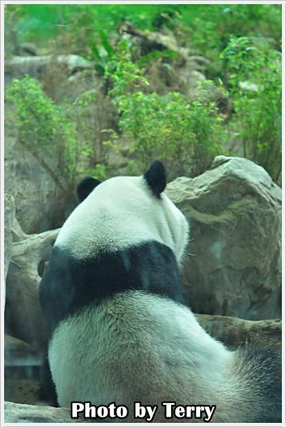 動物園 - (10)