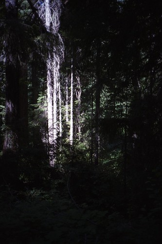 ghosts in the forest
