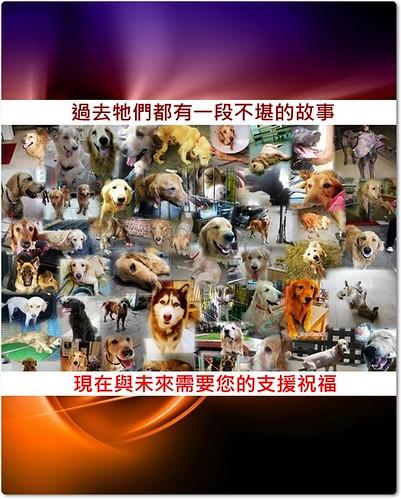 「中途認助養」中途醫療中的,黃金獵犬,拉不拉多,哈士奇,米格魯,狼犬,米克斯,有認養,助養,及動緊小組版各式私人弱勢狗場與狗園總整理一覽表,懇請隨手幫忙轉PO~謝謝您!20100726-更新