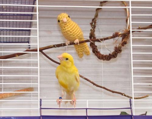 Amigurumi Bird Feet : Canary and Robin Amigurumi - We Love Amigurumi