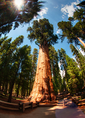 Sequoia National Park 19