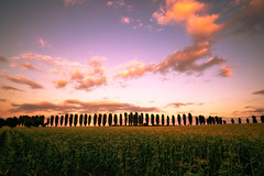 populus nigra (Dennis_F) Tags: sunset sky black colors clouds zeiss germany landscape deutschland evening colorful poplar skies sony wide feld himmel wolken fullframe dslr karlsruhe landschaft ultra durlach ssm nigra pappel 1635 uwa abends weitwinkel schwarze populus ultrawideangle uww a850 163528 sonyalpha populusnigra sonydslr vollformat zeiss1635 sal1635z cz1635 dslra850 sonya850 sonyalpha850 alpha850 sonycz1635