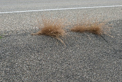 kracht (Birgit Speulman) Tags: grass gras strength growing asphalt asfalt groeien