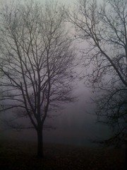 Early morning fog (Raezyrae5) Tags: cameraphone trees water beauty fog interesting pretty unique country unusual iphone