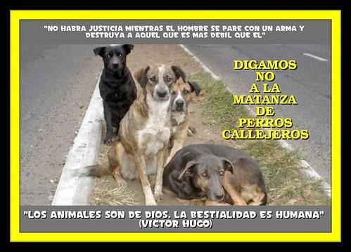 no a la matanza de perros callejeros