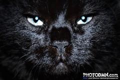 CLETUS - GATOCAN (Mi gato persa, Medal 2010)