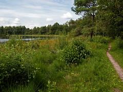 (Jeroen Hillenga) Tags: lake netherlands meer forrest bos ven drenthe westerveld vledder vledderveen