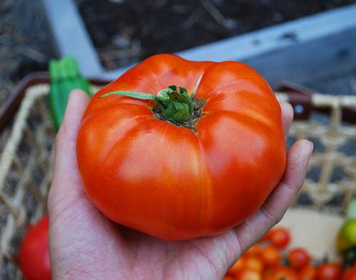 Ripe Brandywine Tomato
