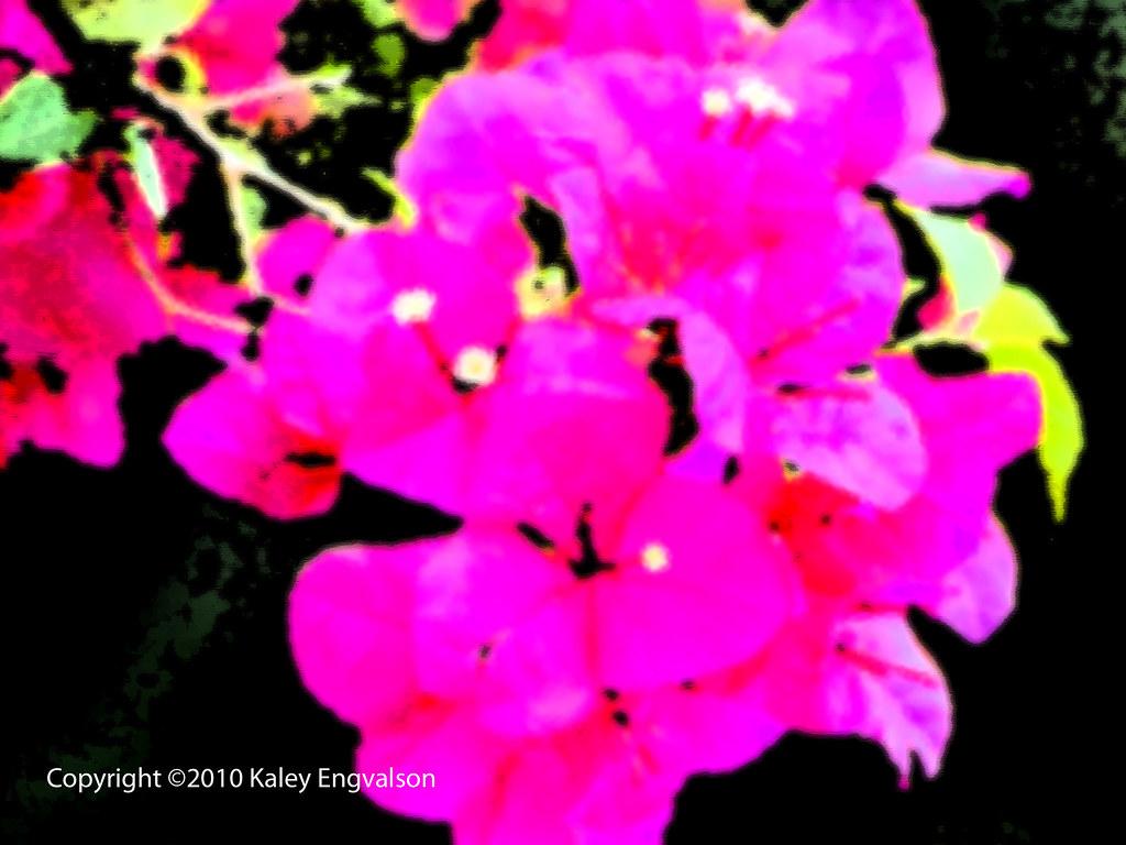 Filter DSC 0725 edit 1 edited-1