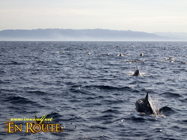 A Superpod of Dolphins at the waters of Pamilacan