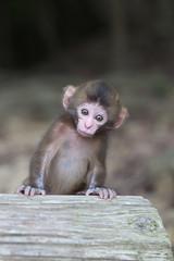 Peep (Masashi Mochida) Tags: baby monkey awaji naturesfinest coth supershot impressedbeauty rubyphotographer alittlebeauty